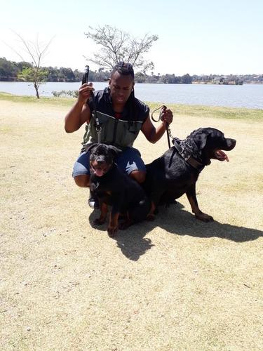 Adestramento Para Cães Qualquer Raça Ou Idade.