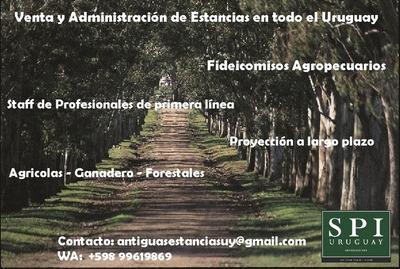 Campos Y Estancias Completas En Todo Uruguay