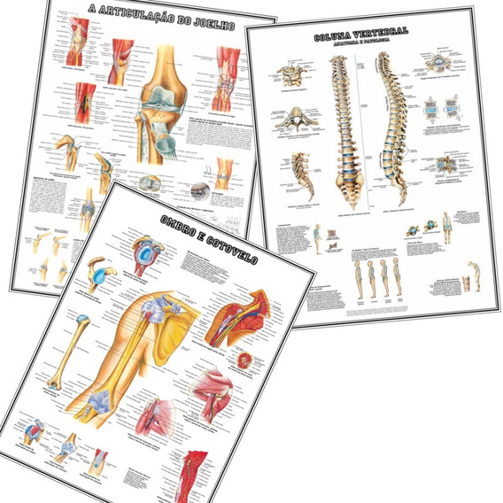 3 Posters Anatomia 65x100cm Joelho Ombro E Coluna Vertebral