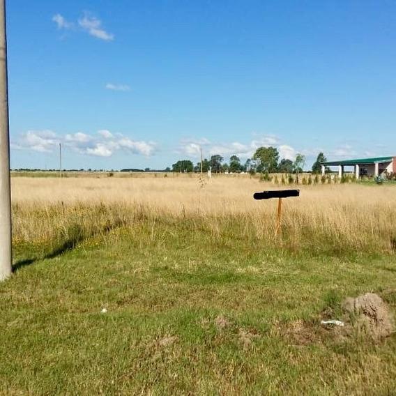 Terreno Lote Altura Peaje Samborombon 325m2 Acceso Ruta 2