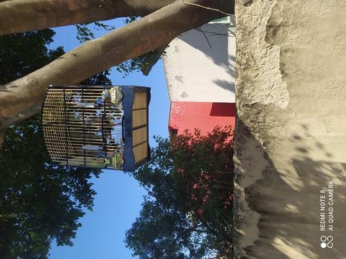 Imagem 1 de 1 de Treino De Pássaros