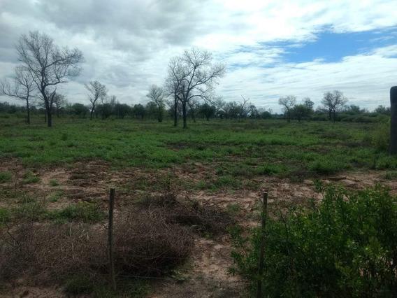 Venta Campo En Santiago Del Estero, Norte De Monte Quemado