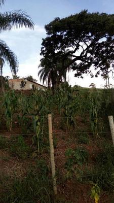 Em Igarapé