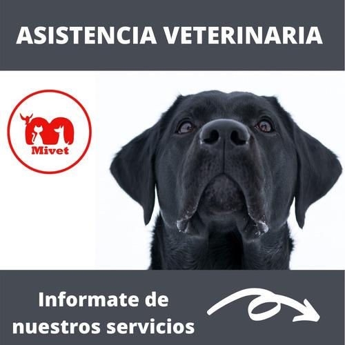 Asistencia Veterinaria A Domicilio, Urgencias Montevideo