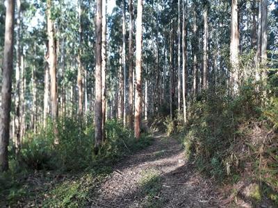 Vendo 2 Terrenos / Fazenda Com Reflorestamento