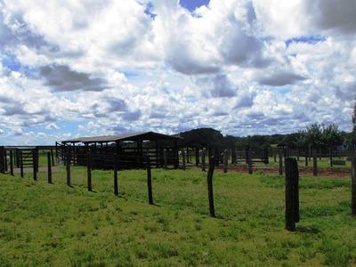Fazenda Em Dueré - To, P/ Pecuária - 187