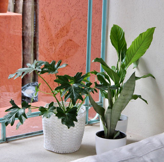 3 Plantas Deco Con Maceta Interior Living Oficina Evento