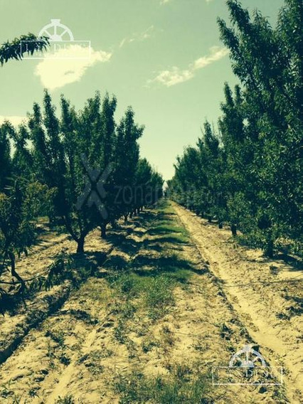Campo - Finca Productiva De Primer Nivel, Sobre Ruta 7, Mendoza