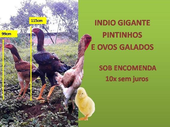Ovos Índio Gigante Puro.dúzia 12un. Sc