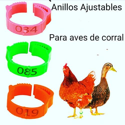 Anillos Para Gallina Y Faisanes Ajustables Numerado 3colores