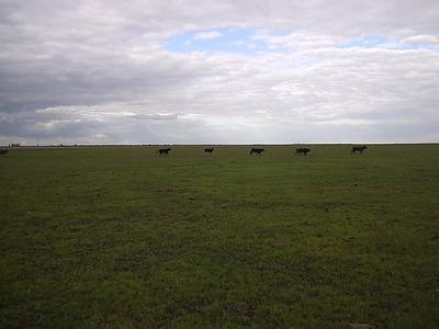 Campo Ganadero Gualeguay 142 Hctas