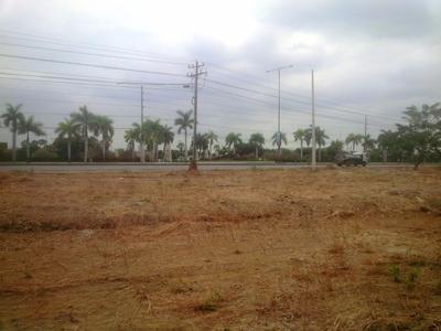 Terreno Comercial Pie De Via Av. Leon Febres Cordero 300 M2