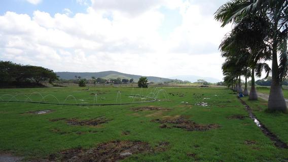 Rah: 20-3174. Terreno En Venta En Municipio Peña