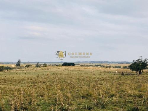 Campo 7 Has 2091 M2 Cerca De Bodega Garzon Y Pueblo Garzon - Consulte !!!!!- Ref: 3028