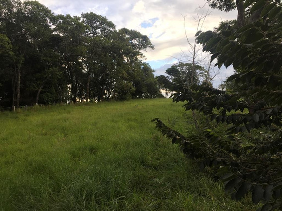 Sítio À Venda, Pitangueiras De Cima, Pedra Bela. - Si0009