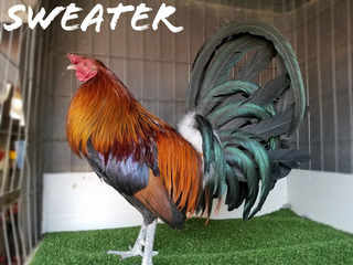 Gallos Sementales Sweater Pv Limpios !!!!
