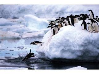 Puzzle Tomax Pinguinos En El Artico X 1500 Piezas