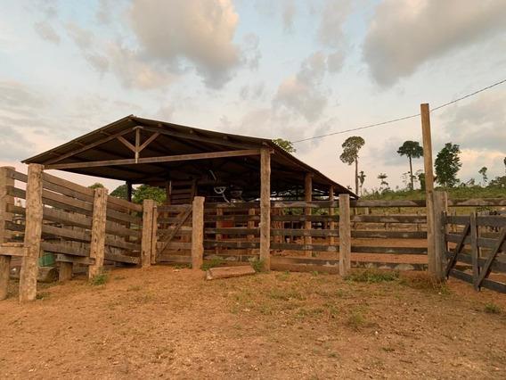 Fazenda 120 Alqueires Com 60 De Pastagem