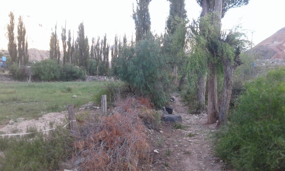 Terreno Unico En Tilcara Centro. Casi 1/2 Hectarea Arbolada