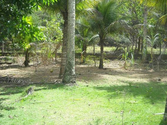 Area Em Praia Formosa Aracruz Espirito Santo-es