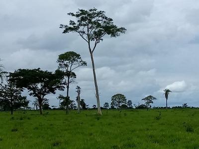 Fazenda A Venda Em Anaurilândia - Ms (dupla Aptidão) - 733