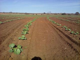 Excelente Fazenda Em Jaiba Mg