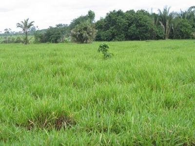 Fazenda A Venda Em Recursolândia - To, ( Pecuária ) - 539