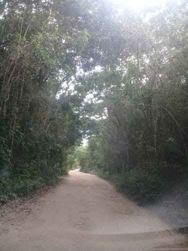Promocion: 6 Hectareas En Venta A 5km De Playa Xpu-ha