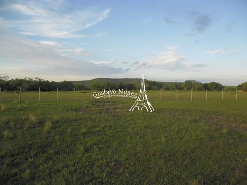 Campo En Tacuarembó- Ref: 2658