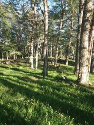 Venta De Terreno, Bosque, Laguna, Fósiles,camino, Arroyos