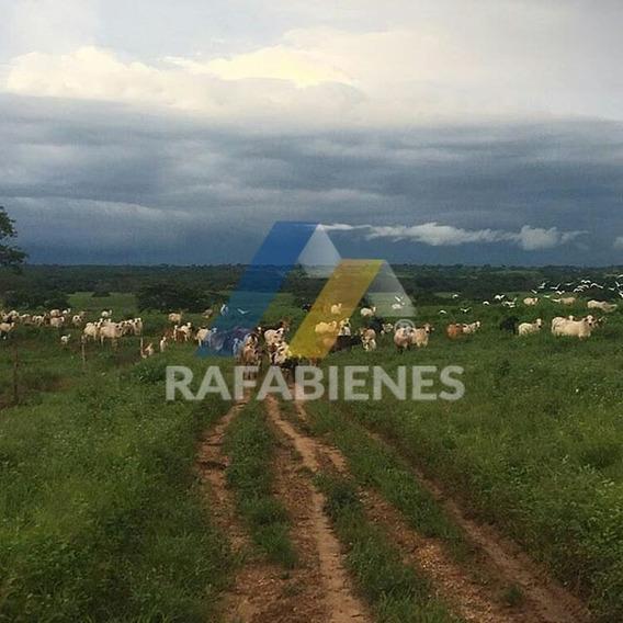 Haciendas - Fincas, Hato En Venta En Guarico