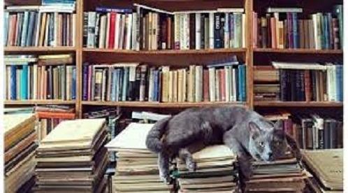 Lote 25 Livros Literatura Nacional E Estrangeirafrete Grátis
