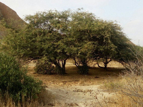 Vendo Terreno Con Registros Publicos En Zorritos,tumbes