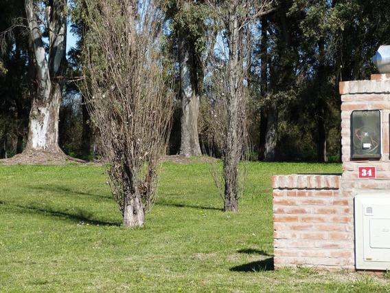 Lote 34 Con Fondo A Hilera De Eucaliptos. Santa Irene, Luján