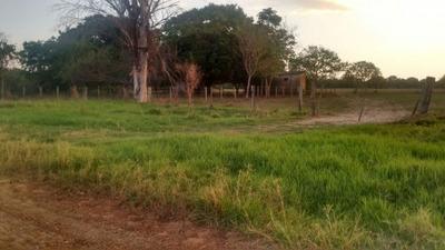 Fazenda A Venda Em Aquidauana - Ms (pecuária) - 1140