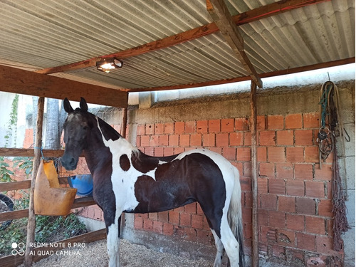 Imagem 1 de 4 de Egua Cavalo