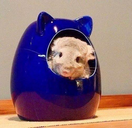 Ceramic House Azul