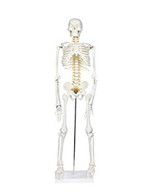 8c8ab3af07f Esqueleto Humano Halloween - Herramientas y Construcción en Mercado ...