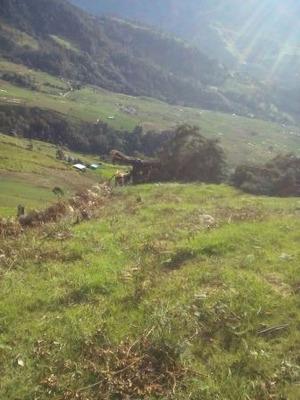 Vendo Finca En Tenerife El Cerrito Valle