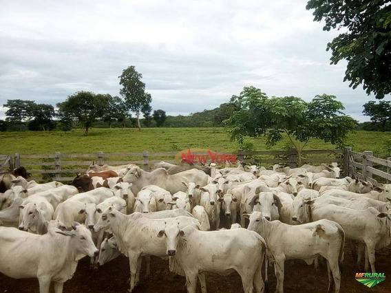 Fazenda À Venda, 19520000 M² Por R$ 24.900.000,00 - Zona Rural - Poconé/mt - Fa0024