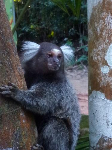 Imagem 1 de 1 de Foto De Macaco
