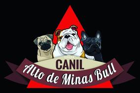 Bulldog Inglês Linhagem Importada Dos Eua Pedigree Cbkc