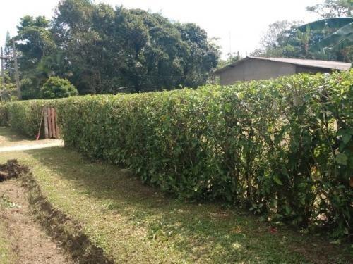 Chácara No Bairro Jardim Aguapeu, Em Itanhaém - 7130
