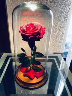 Rosa Eterna De 35 Cm Sin Placa