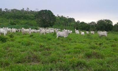 Fazenda Em Pedro Afonso - To, P/ Pecuária - 489