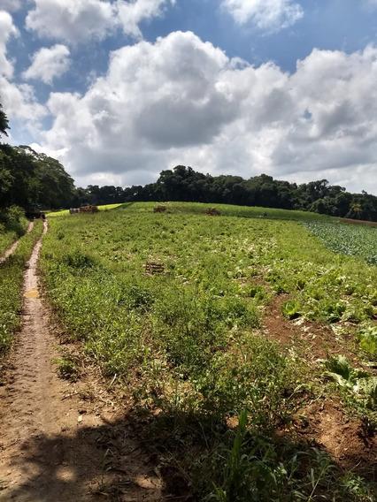 L. Terrenos Em Ibiúna, Preço Imperdível, Lançamento