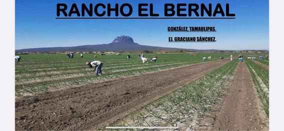 Rancho El Bernal