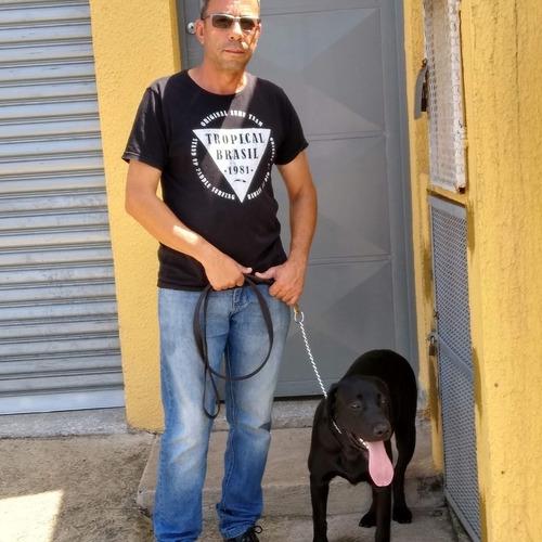 Imagem 1 de 1 de Adestramento De Cães A Partir De 6 Meses Qualquer Raça