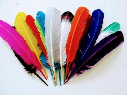 Penas De Pato Coloridas 260 Unidades