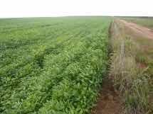 Excelente Fazenda 24 Mil Hectares Em Santiago Do Norte Mt
